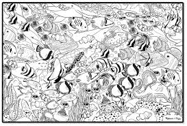 Small Picture Sea Life Coloring Pages For Preschool Archives At Sealife Coloring