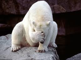 Povaha Síly Ledního Medvěda Lední Medvěd Je Velký Dravec Severu