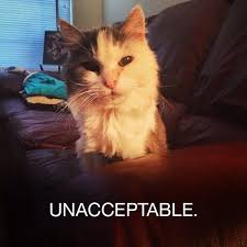 Sassy the Unacceptable meme cat | Geek | Pinterest | Meme and Cat via Relatably.com