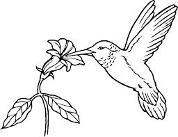 Small Picture Special Hummingbird Coloring Pages For KIDS Bo 7236 Unknown