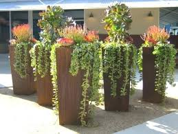 tall plants for pots inspirations of outdoor potted best containers pot large shaded areas hybrid coleu