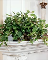 Decorative Plants For Home An Elegant Front Garden With Decorative Plants For Home