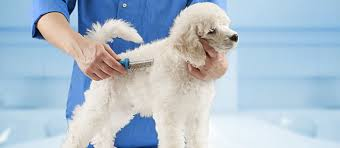 it s normal for dogs to shed but how much shedding is too much find out what to do if you notice your dog losing hair