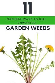 how to get rid of weeds in garden. 11 Natural Ways To Kill Your Unwanted Garden Weeds Immediately. | Ideahacks.com How Get Rid Of In