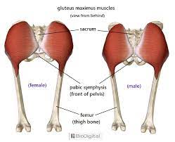 Outer thigh pain has many possible causes, and it can vary in severity. Legs To Base Line Connection Rectus Femoris Gluteus Maximus