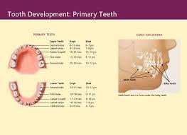 Dr. James J Herget - Dentist Mayville WI   Baby teeth, Baby development,  Development