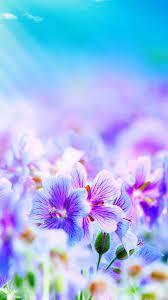 Purple Flowers Desktop Galaxy S4 ...