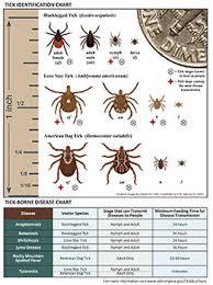 Tick Identification Chart Common Ticks In Fairfax County Health