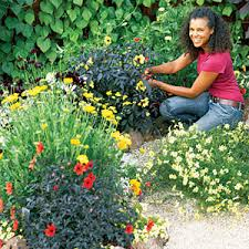 Small Picture How to Design a Hot Color Flower Garden Planting Gardens and Flower