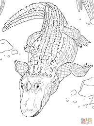 Dessin De Coloriage Alligator Imprimer Cp00772
