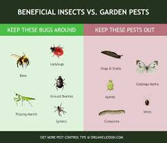 good bugs vs bad bugs find out which of these insects are true garden pests