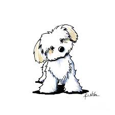 Small Picture Quizzical Havanese Pets Dog cartoons and Search