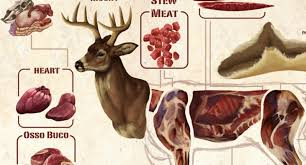 Wild Game Meat Cutting Chart Deer Meat Butchering Diagram Do You Know All Your Deer Parts
