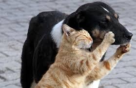 Hayvan Hakları Örgütleri Bakanlık'taydı: Sokak Hayvanlarına Dokunmayın! -  bianet