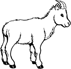 Small Picture Wildlife of Goat Coloring Pages Color Luna