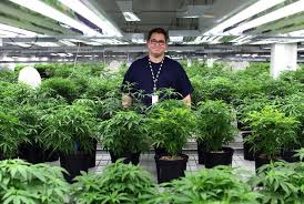 Image result for Simon Harris pledges to take action on medicinal cannabis