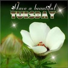 Beautiful Tuesday Quotes Best of Have A Beautiful Tuesday Tuesday Tuesday Quotes Tuesday Images