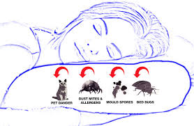 Dust Mites Pillow Covers