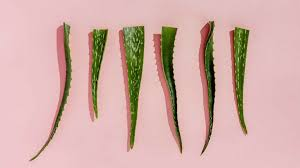 Can You Eat <b>Aloe</b> Vera?