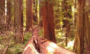 Tickets, tours, address, phone number, grizzly creek redwoods state park reviews: Grizzly Creek Redwoods Sp