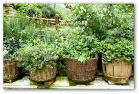 Small Picture Easy Container Garden Ideas Plans and Video