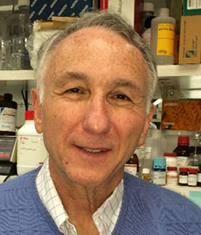 Alfred Singer, M.D.   Principal Investigators   NIH Intramural ...