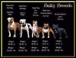 Pin On Doggies