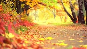 fall nature backgrounds. Visually Similar Footage Fall Nature Backgrounds G