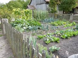 vegetable garden bed or container correctly