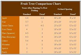 Using Dwarf Fruit Trees In Your Home Orchard Dwarf Fruit