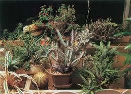 lighting for houseplants. Succulent House Plants Lighting For Houseplants B