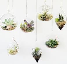 terrarium globes diy bubble glass supreme small hanging