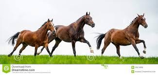 horses galloping in a field. Wonderful Galloping Horses Galloping In A Field Inside Galloping In A Field O