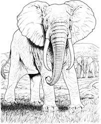 Afrikaanse Olifant Kleurplaat Gratis Kleurplaten Printen