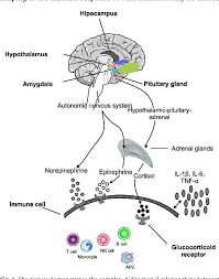 Figure 1 From Interactions Of Orphanin Fq Nociceptin Ofq N System