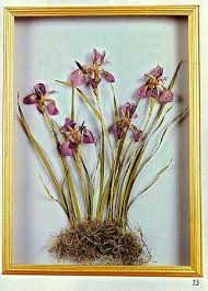 Dried Flower Crafts Book - Dried Floral Arranging