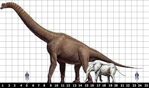 brachiosaurus size men of reddit what is your favorite dinosaur and why askmen