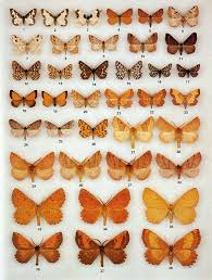 Moth Identification Chart The Colour Identification Guide To Moths Of The British