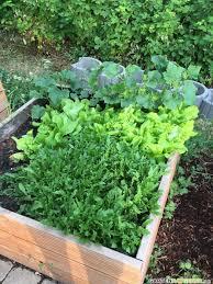 Hochbeet F Llen Pflegen Und Bepflanzen Gartengestaltung