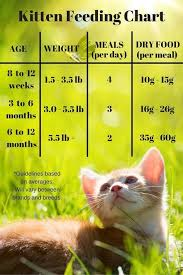 Baby Kitten Feeding Chart Kitten Feeding Chart For Kittens On A Dry Food Schedule