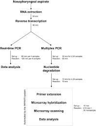 Flowchart Comparing The Protocols For The Real Time Pcr