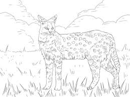 Small Picture Serval African Wild Cat coloring page Free Printable Coloring Pages