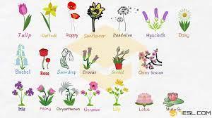 Flower names ...