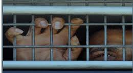 Image result for prison in eritrea