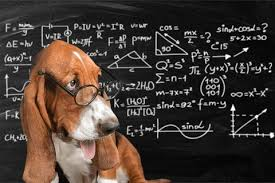 Converting Dog Years To Human Years Chart How Old Is My Dog Dog Years To Human Years Dog Age