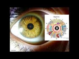 Bernard Jensen Iridology Chart Pdf A Number Of Iridology Overviews Using Bernard Jensen Dr