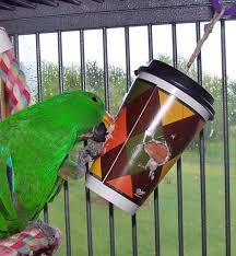 a chinet fort cup made into a parrot foraging toy