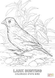 Small Picture Colorado State Bird coloring page Free Printable Coloring Pages