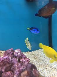 petco animals fish. Wonderful Petco Click  With Petco Animals Fish R