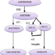 Flow Chart Of Renin Angiotensin System Download Scientific